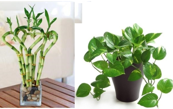 Did you know these 5 plants can bring love luck prosperity to your life top 10 plants - Good plants for home ...