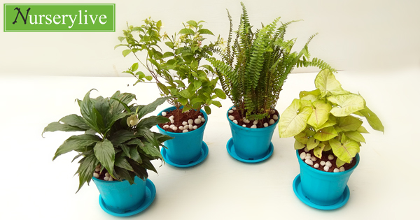 nurserylive-monsoon-special-top-4-air-purifier-plants-pack