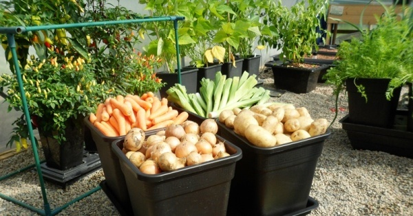 Try these steps for easy vegetable gardening in small space garden talk nurserylive wikipedia - Vegetable gardening in small spaces image ...
