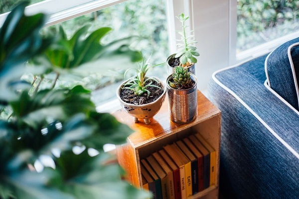Why is my Plant Dying? - Garden Talk - NurseryLive Wikipedia