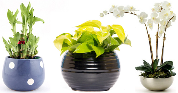 How indoor air quality can be improved 24 x 7 with these - Lucky indoor plants feng shui ...