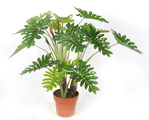 Love plants but no sunlight these plants can be your best buddy top 10 plants nurserylive - Indoor plants that require little care ...