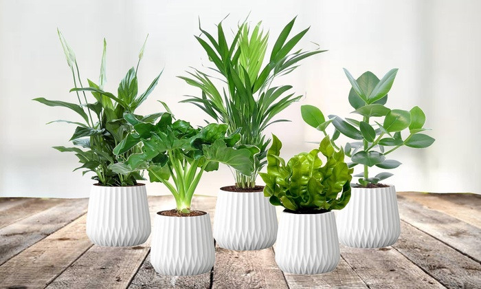 17-air-purifying-plants-group